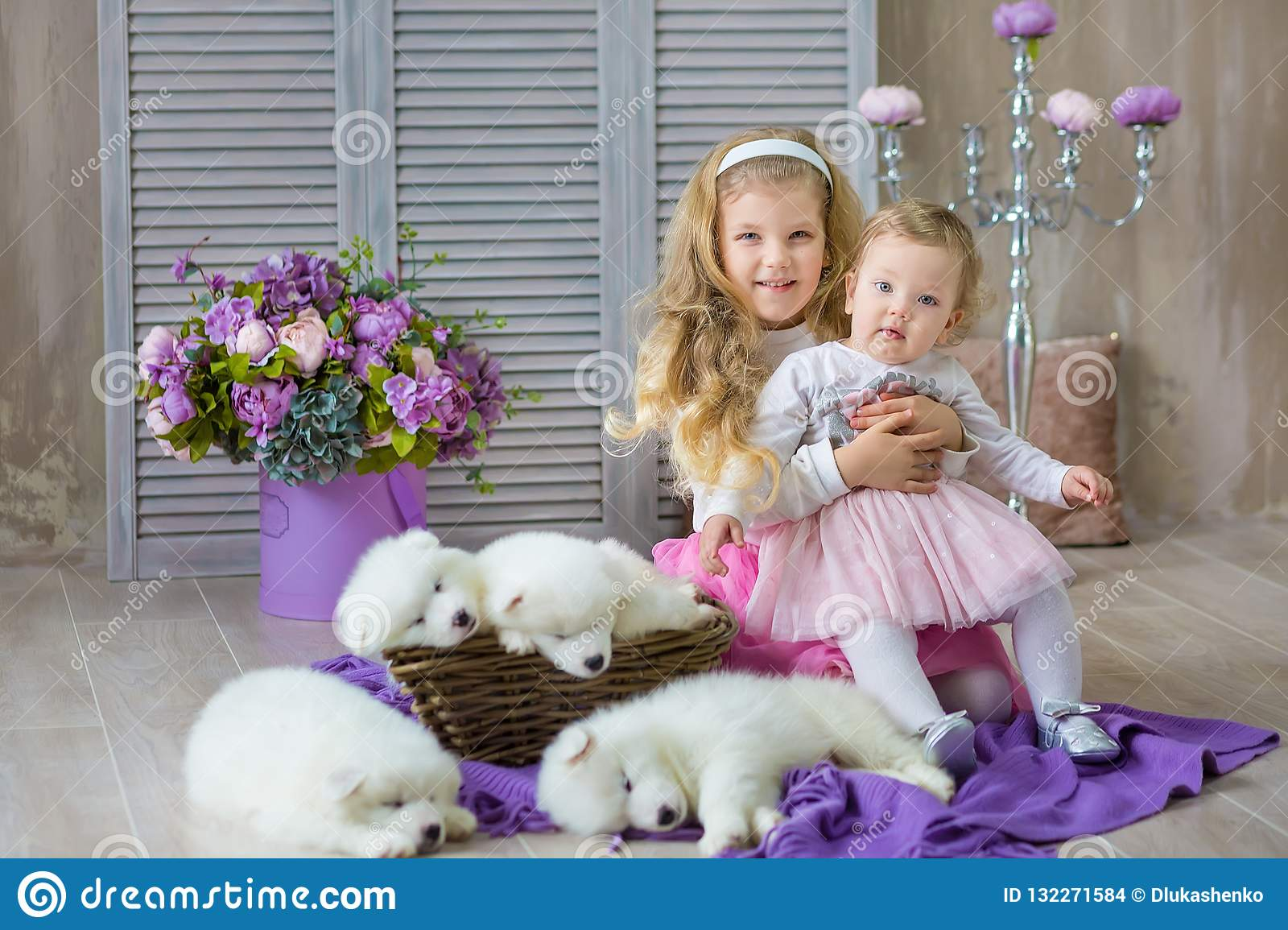9fe918cf6e Blond girl sisters posing with husky puppy white color in retro studio  shoot. Cute young child sisters play with puppy dogs in designed home  decorations