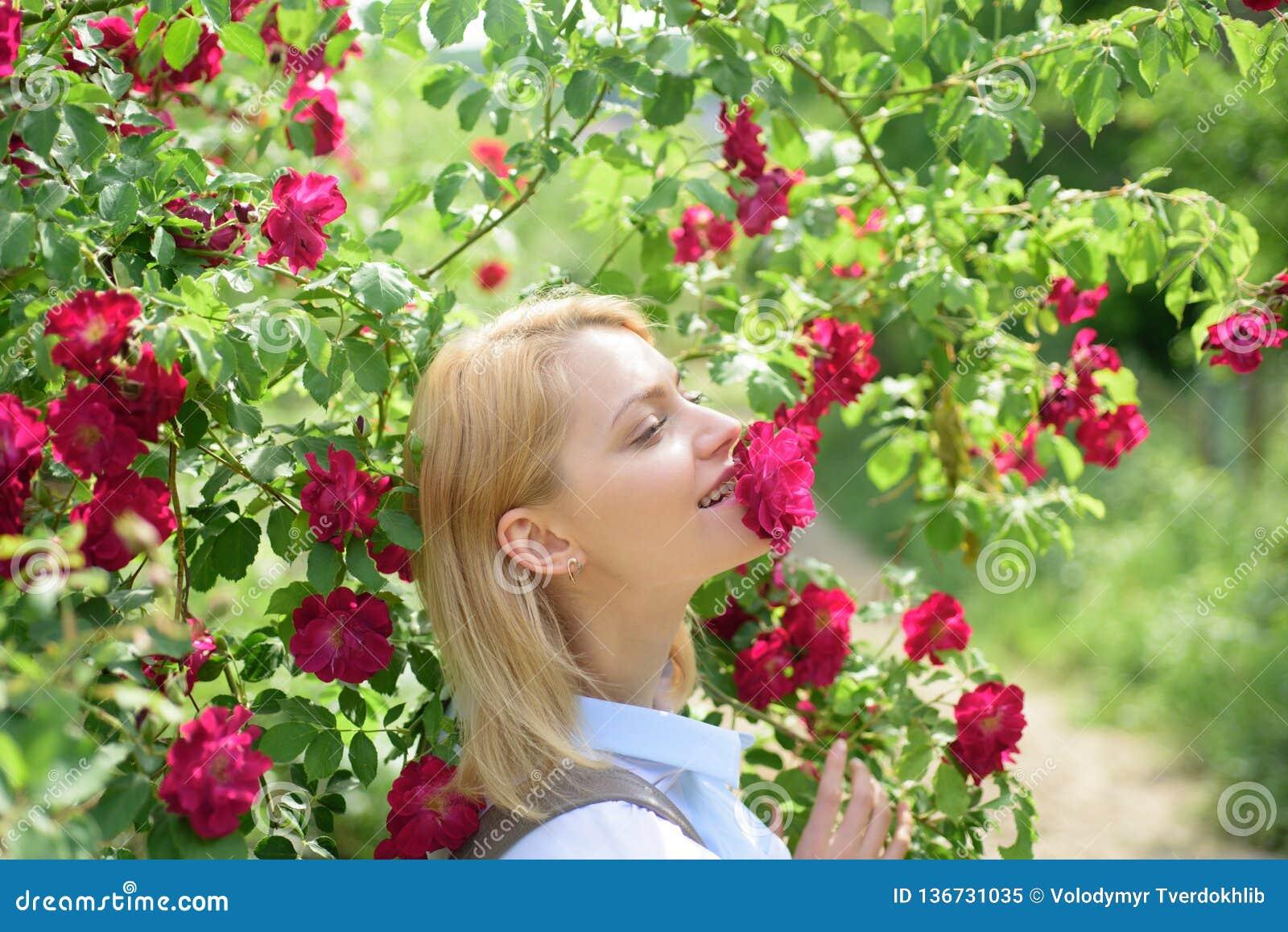 Blond skönhet som luktar rosor Sexig kvinna på att blomma den rosiga rosa busken Den nätta kvinnalukten steg blommor i sommarträd