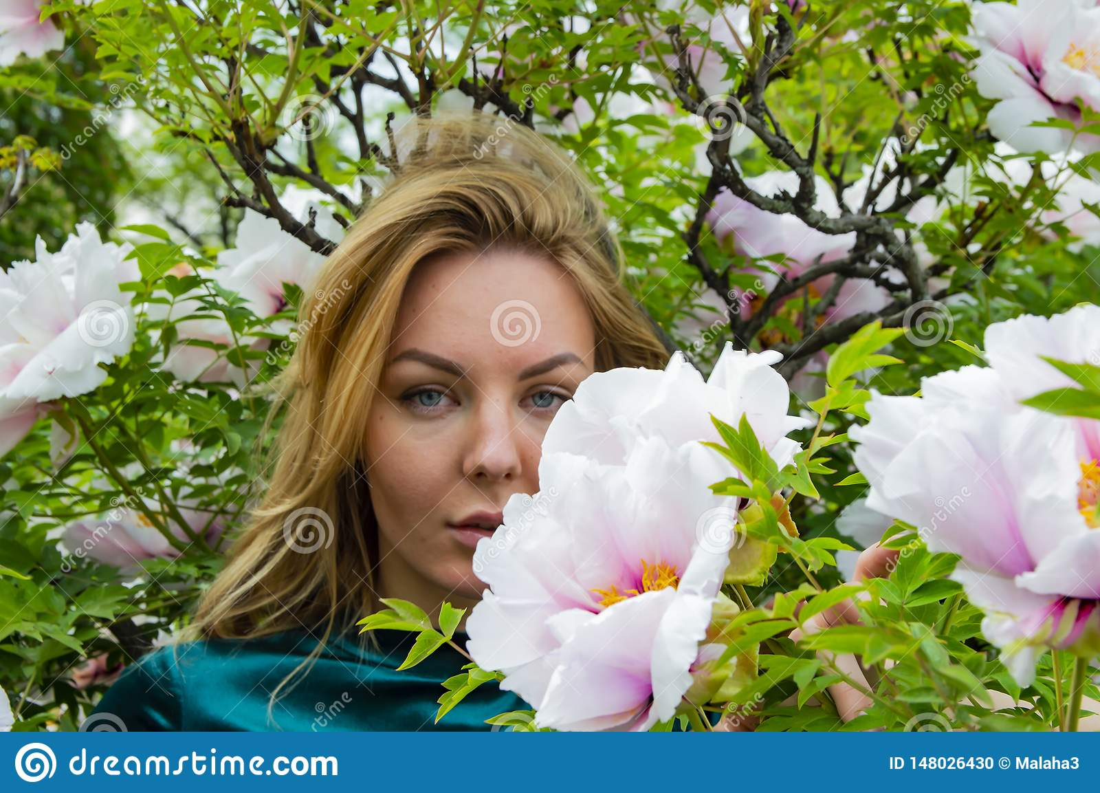 Blondemeisje op een achtergrond van bloemen van de boompioen