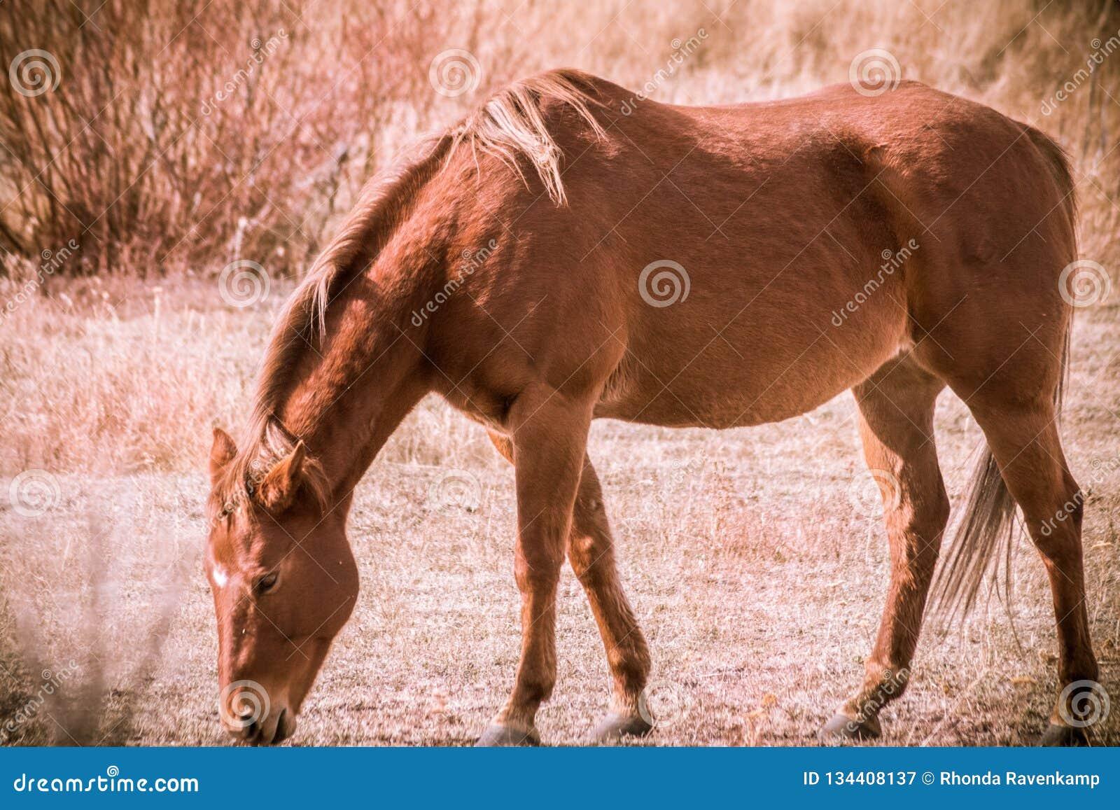 Blondynki Koński pasanie w polu