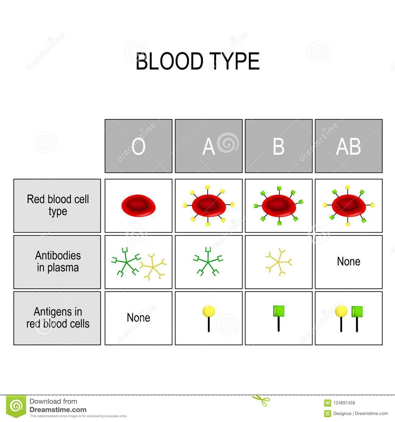 Types of blood A, B, AB, O. Recipient and Donor.