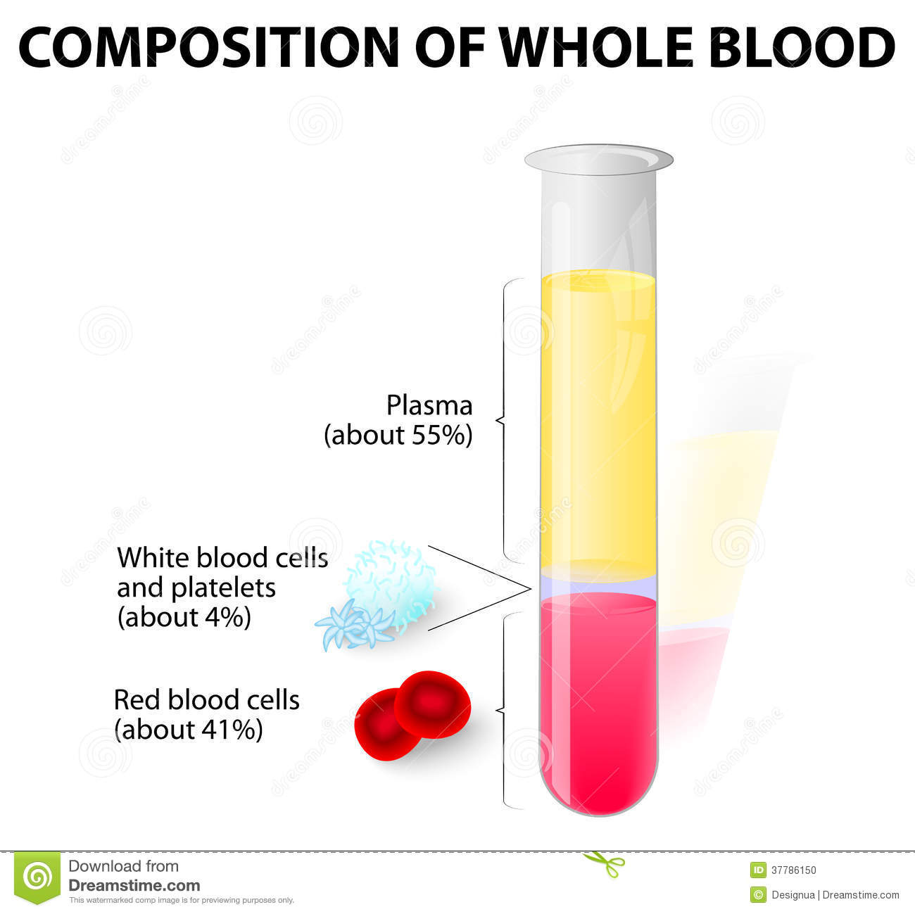 Blood Plasma And Formed Elements In Test Tube Stock Vector Red Cell Erythrocytes The Diagram You Can See A Whole