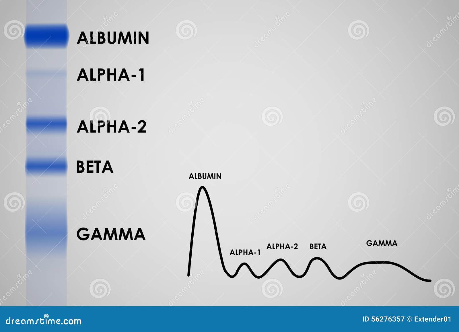 Blood Serum Protein Electrophoresis Stock Vector - Image: 56276357