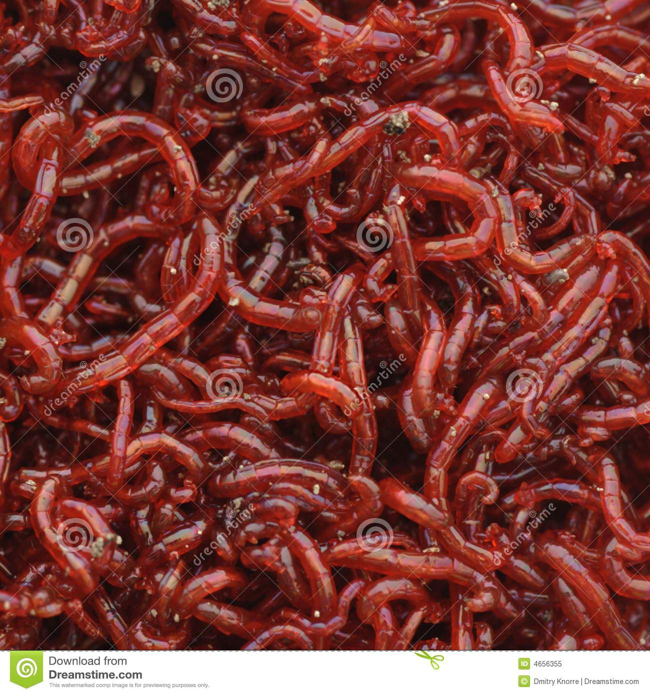 Bloodworms royalty free stock photo image 4656355 for Bloodworms for fish