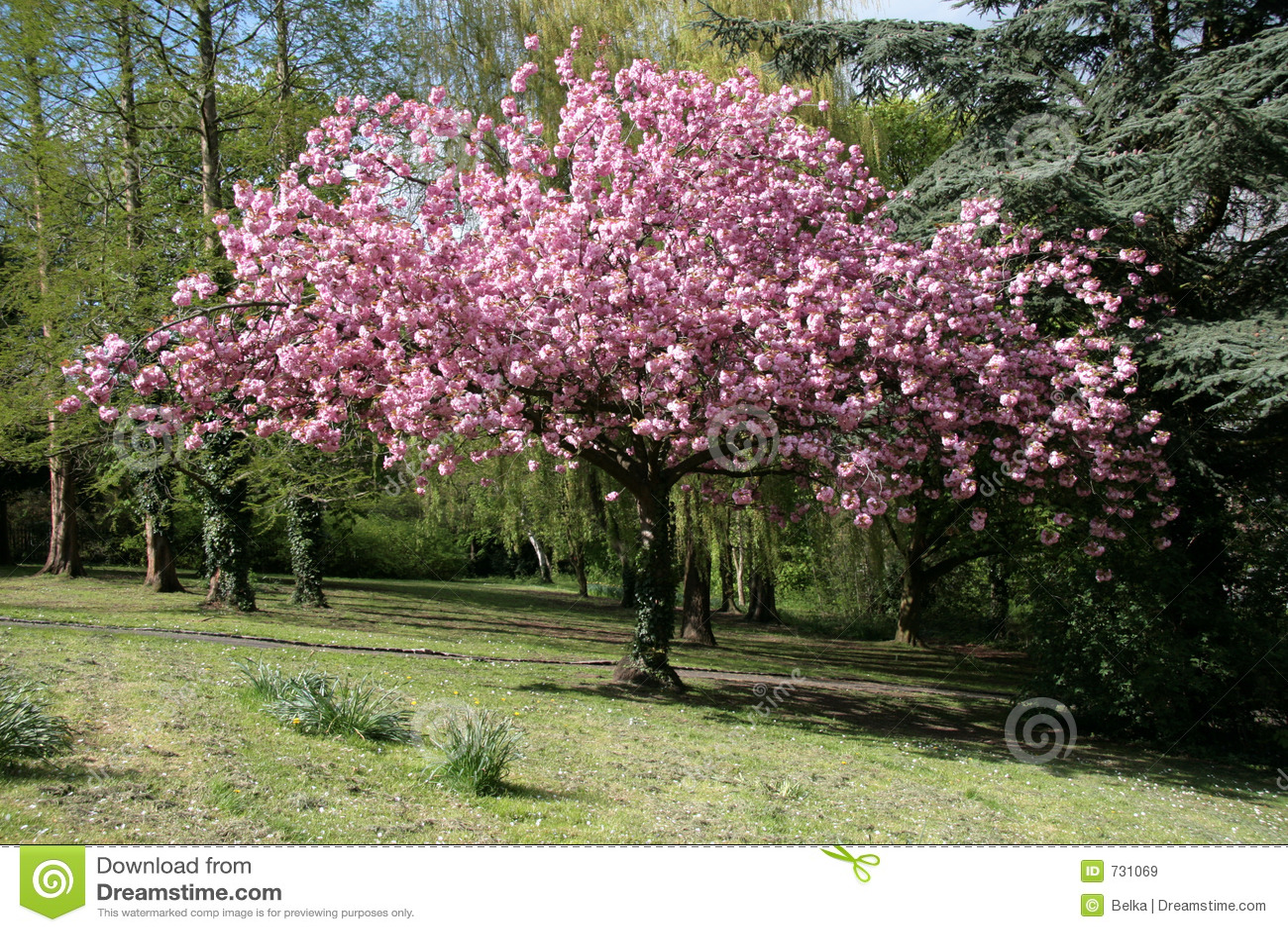 Bloom drzewo