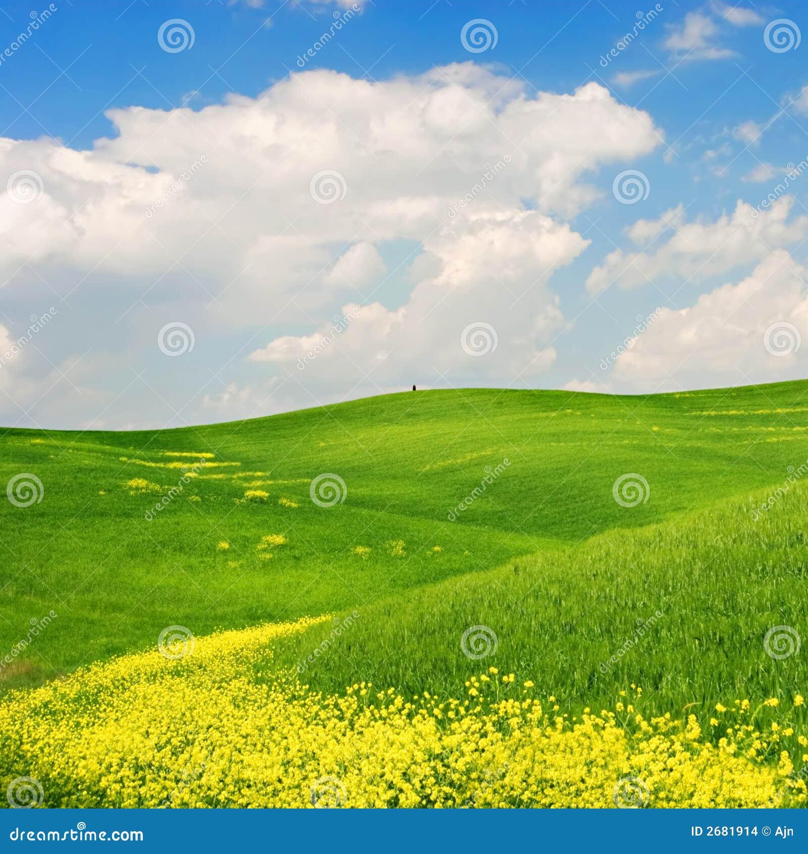 Bloom krajobrazu