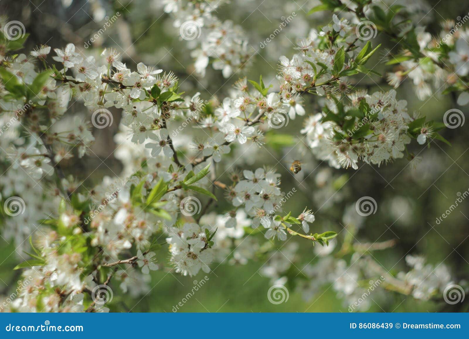 Bloom ogród