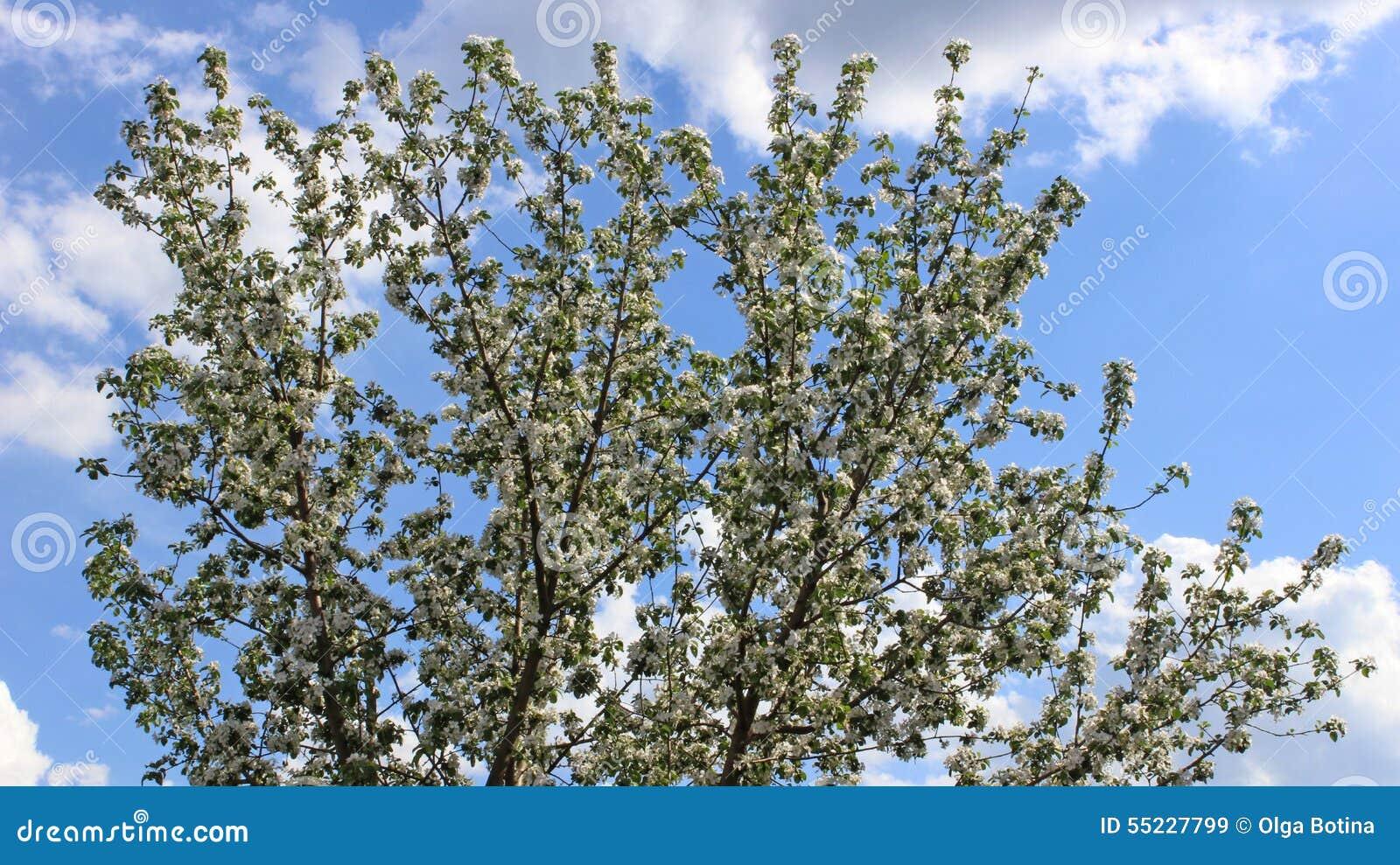 Bloom z drzewa