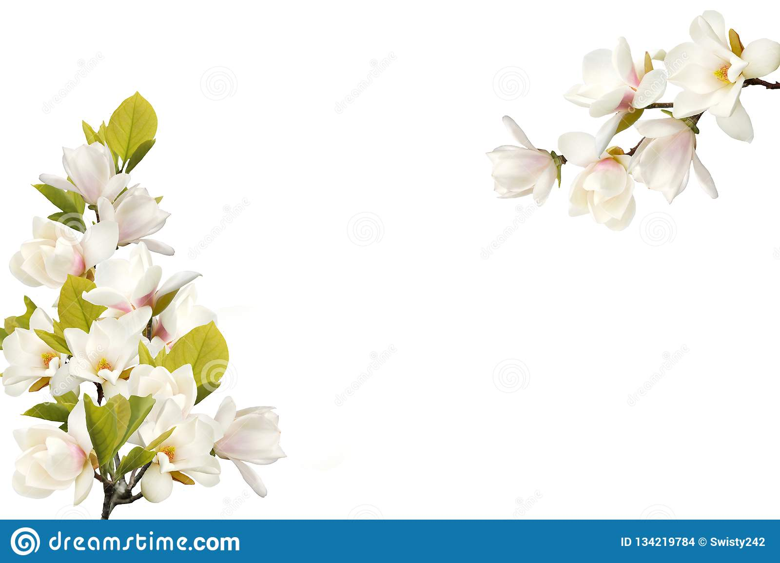 Beautiful Magnolia Flower Bouquet On White Background Stock Photo