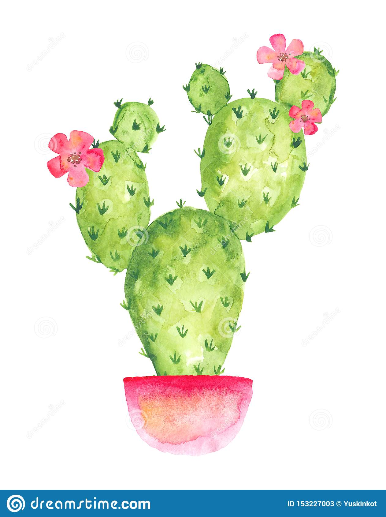 Cactus Porn Dibujo blooming cactus in a pink pot with flowers, watercolor