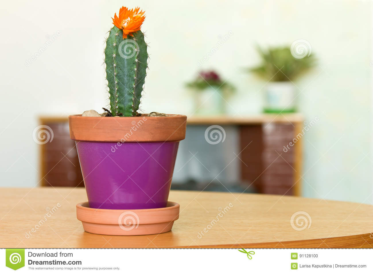 Blooming cactus plant in a flowerpot and other indoor flowers