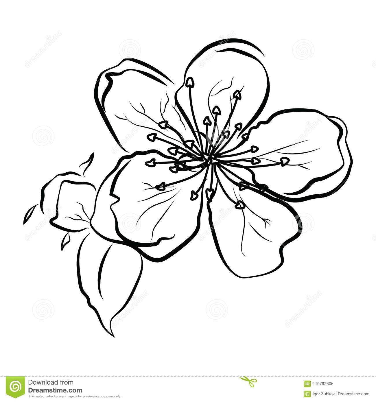 f324906c4 Blooming cherry. Sakura branch with flower buds. Black and white drawing of  a blossoming tree in spring. Logo with Japanese cherry blossoms. Tattoo.