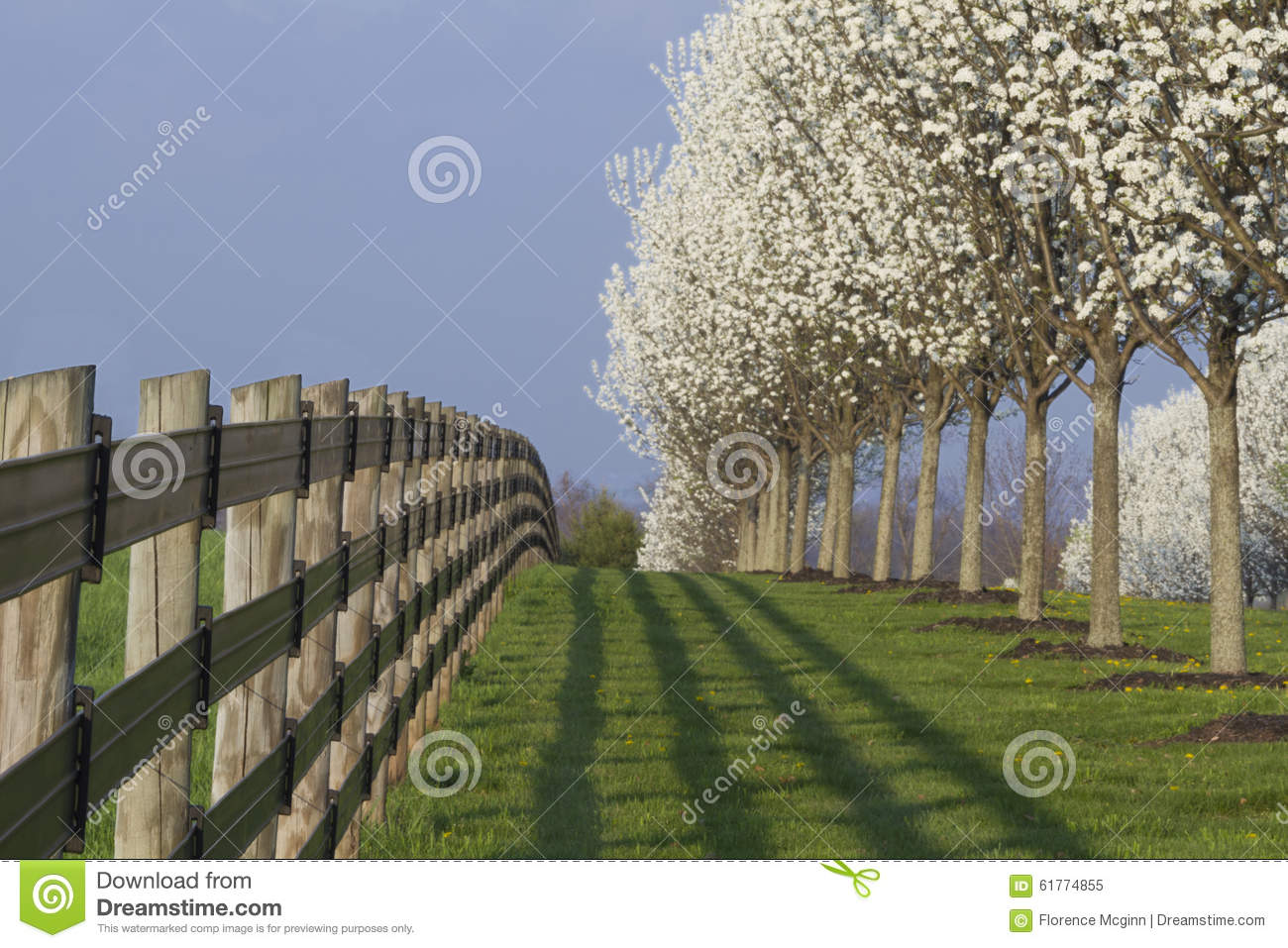 Blooming dogwood trees and fence stock photo image 61774855 copy dogwood fence baanklon Gallery