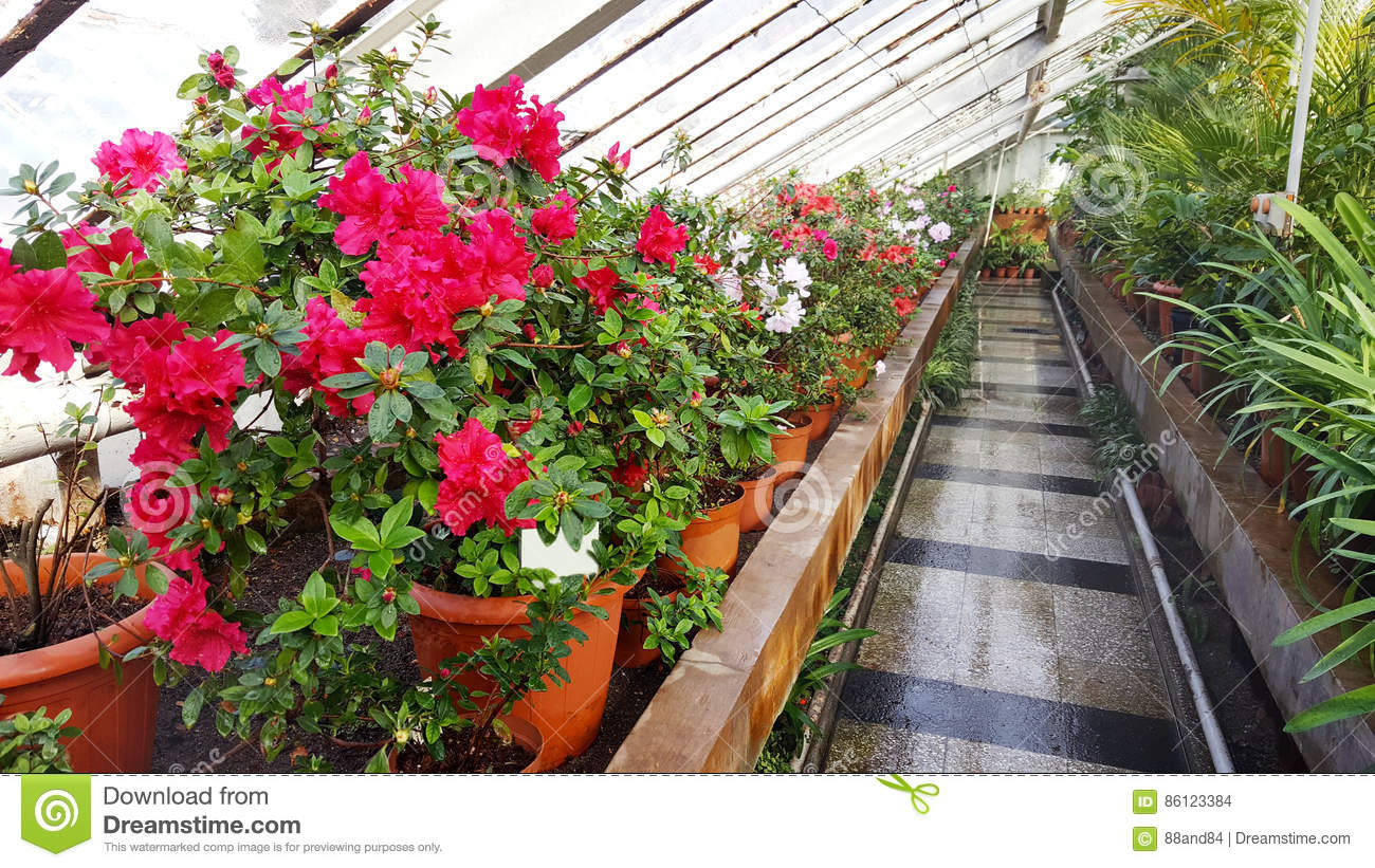 Blooming flowers in botanical garden stock photo image for Botanical garden timing