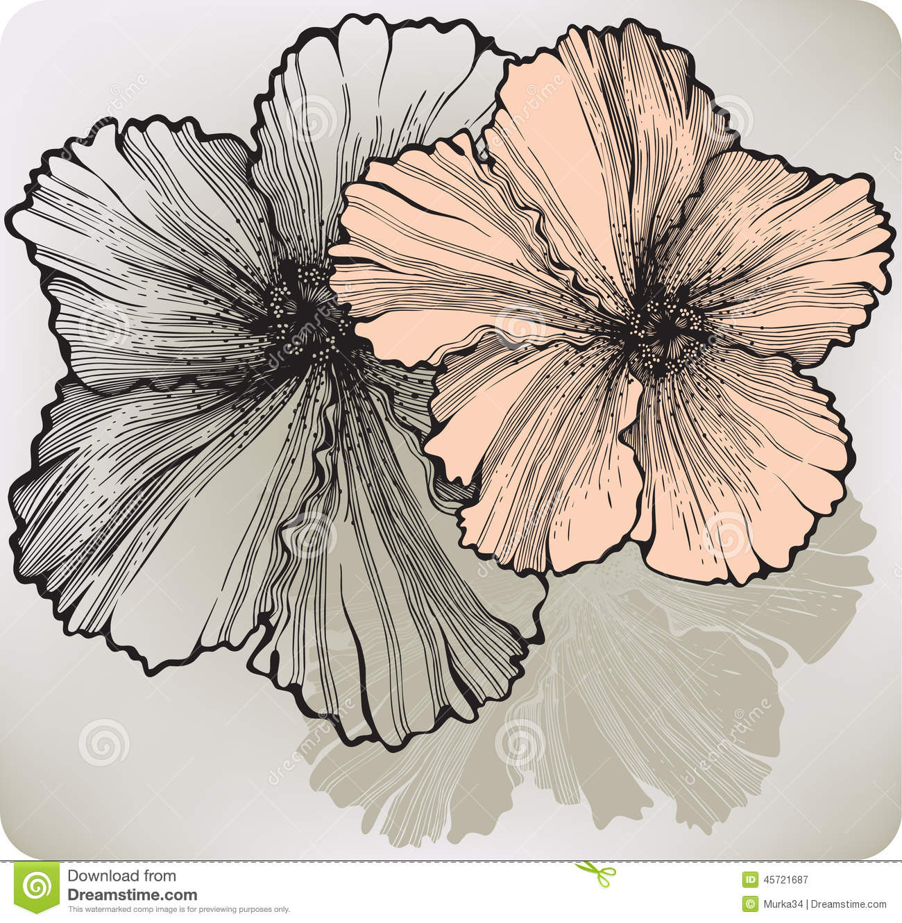 Blooming Hibiscus Flower Hand Drawing Vector