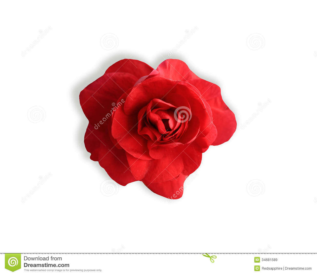 Blooming Impatiens Red Flower Stock Image Image Of Flower