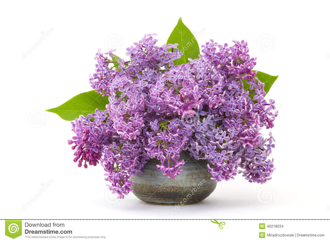 Blooming Lilac Flowers Stock Photo Image 40218034