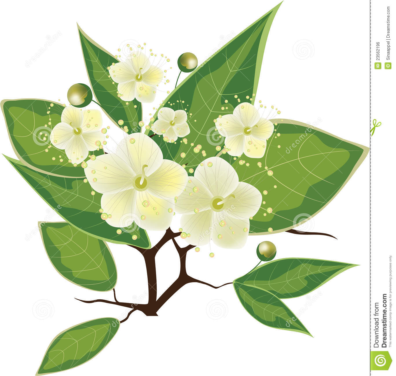 Blooming Myrtle Branch Vector Illustration Royalty Free