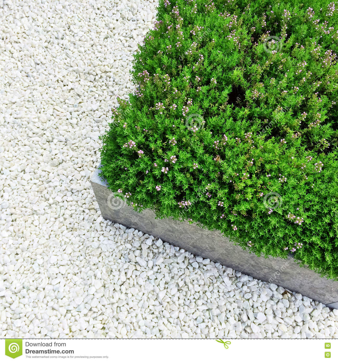 blooming plants on white stone background stock photo - image