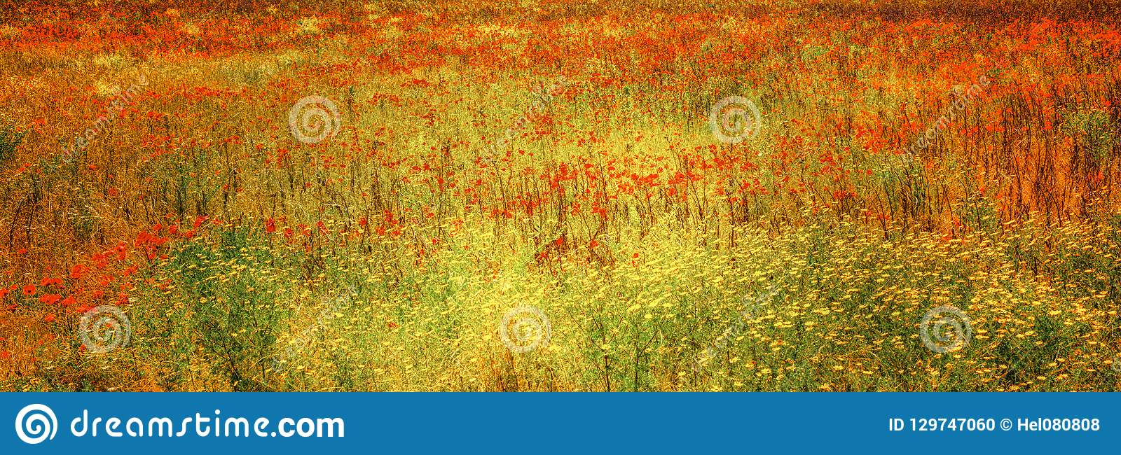 Blooming poppies in meadow, flowery meadow with herbs and summer flowers, Tuscany, Italy