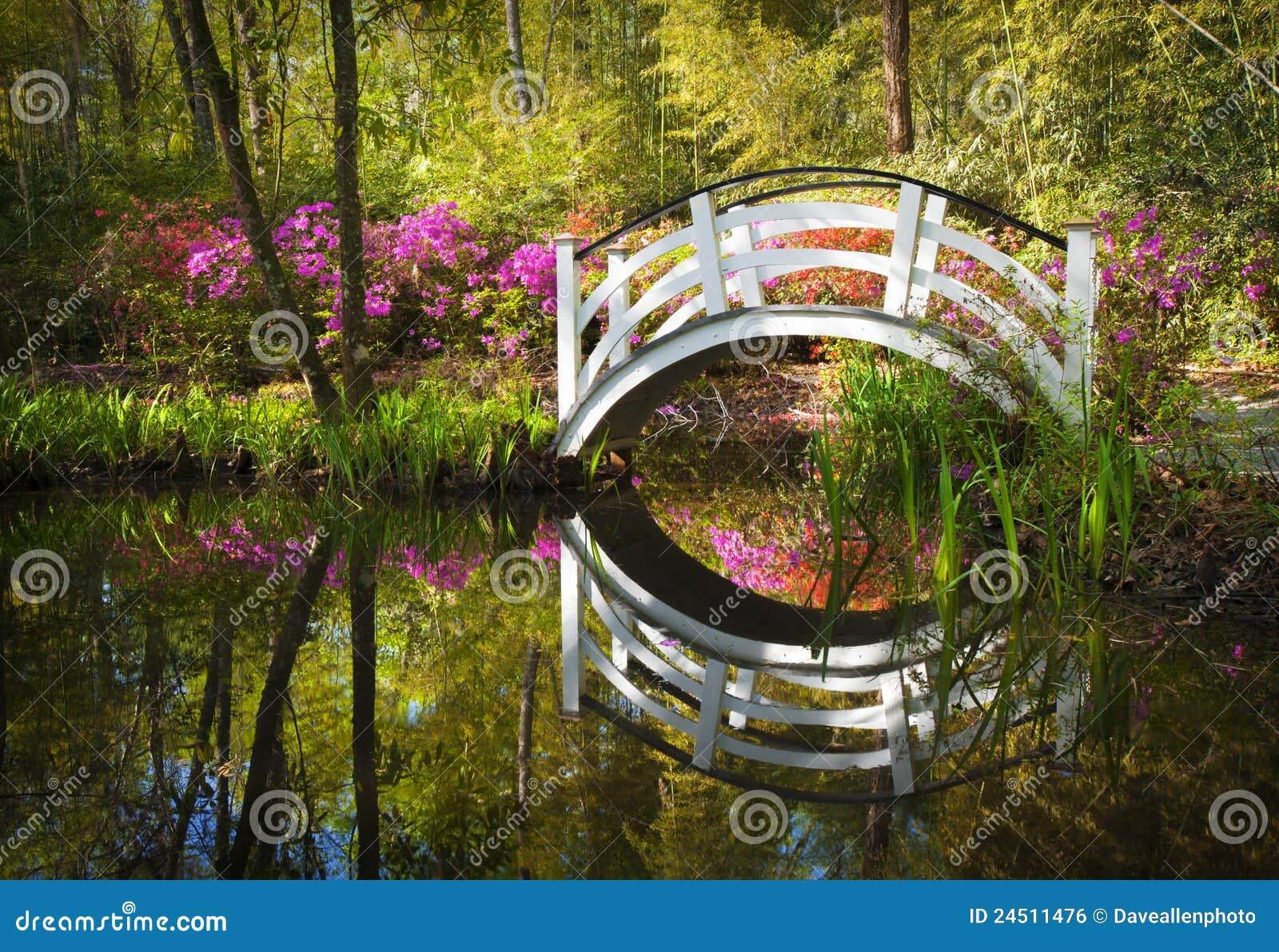 Download Blooming Spring Azalea Flowers Garden Charleston Stock Photo - Image of carolina, enchanted: 24511476