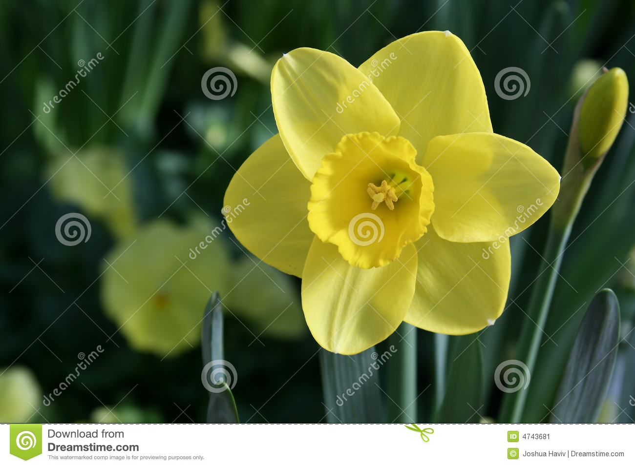 Blooming spring flowers stock image image of meadow botanical 4743681 - Flowers that bloom from spring to fall ...