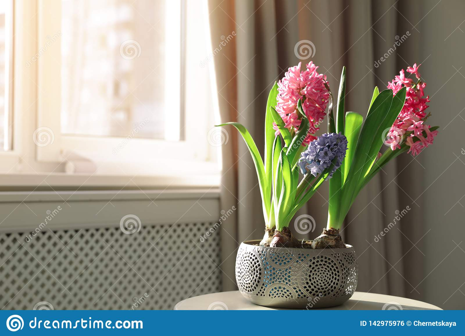 Blooming spring hyacinth flowers on table near window at home