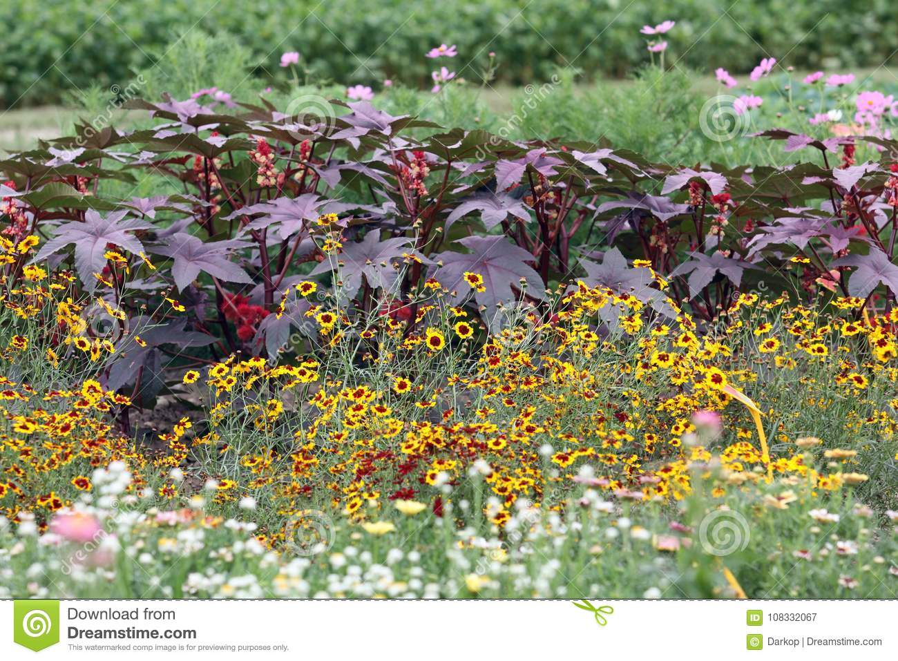 A blooming summer garden bed with high annuals stock image image download a blooming summer garden bed with high annuals stock image image of beds izmirmasajfo