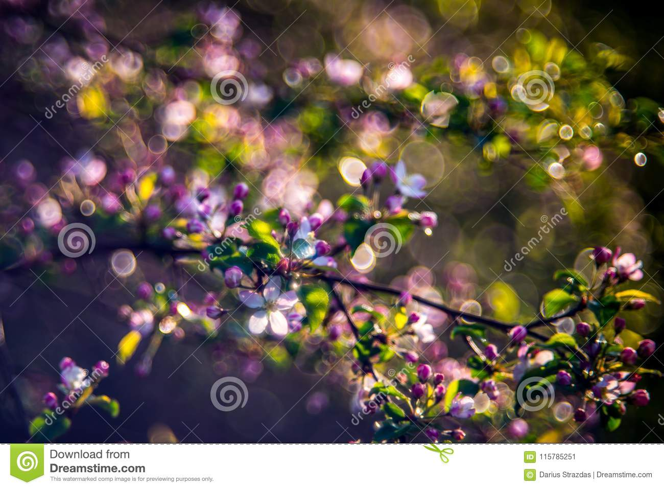 Pink spring blooming in forest