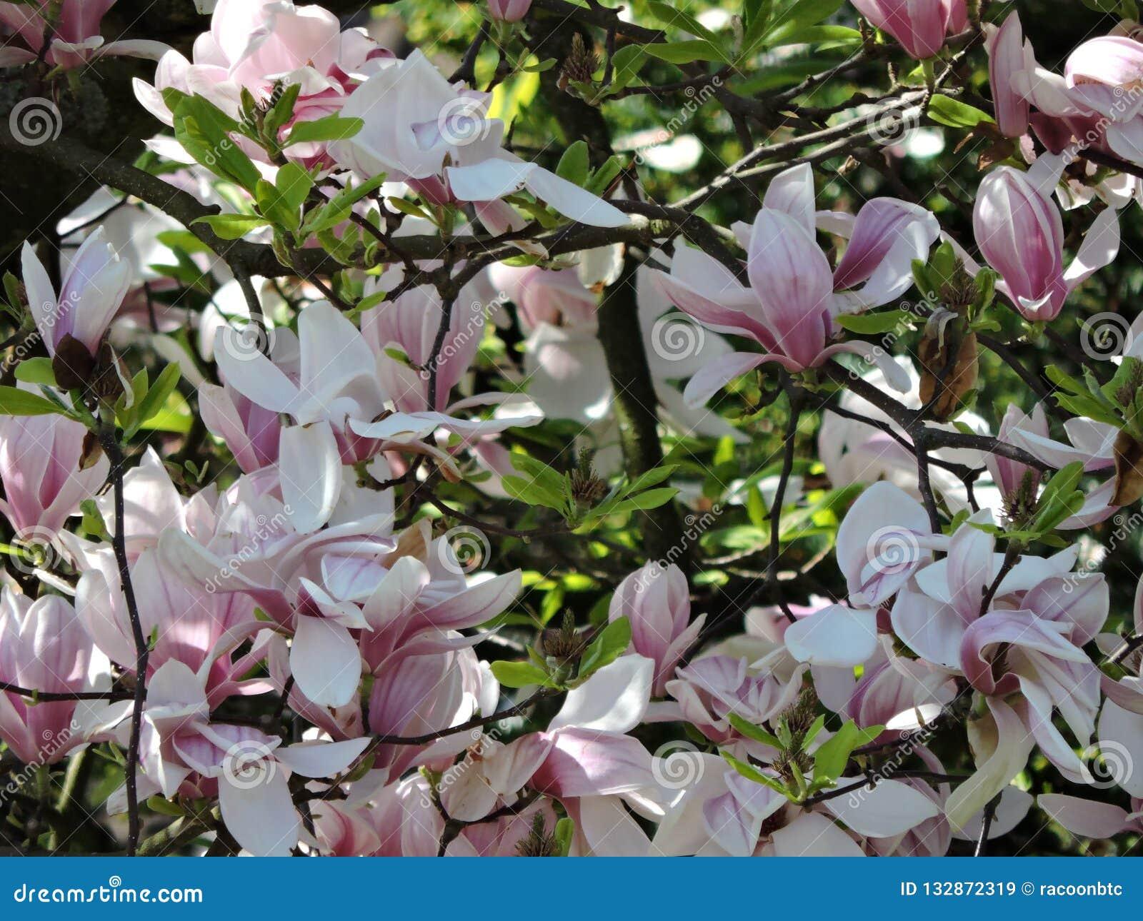 Blooms Karlsruhe