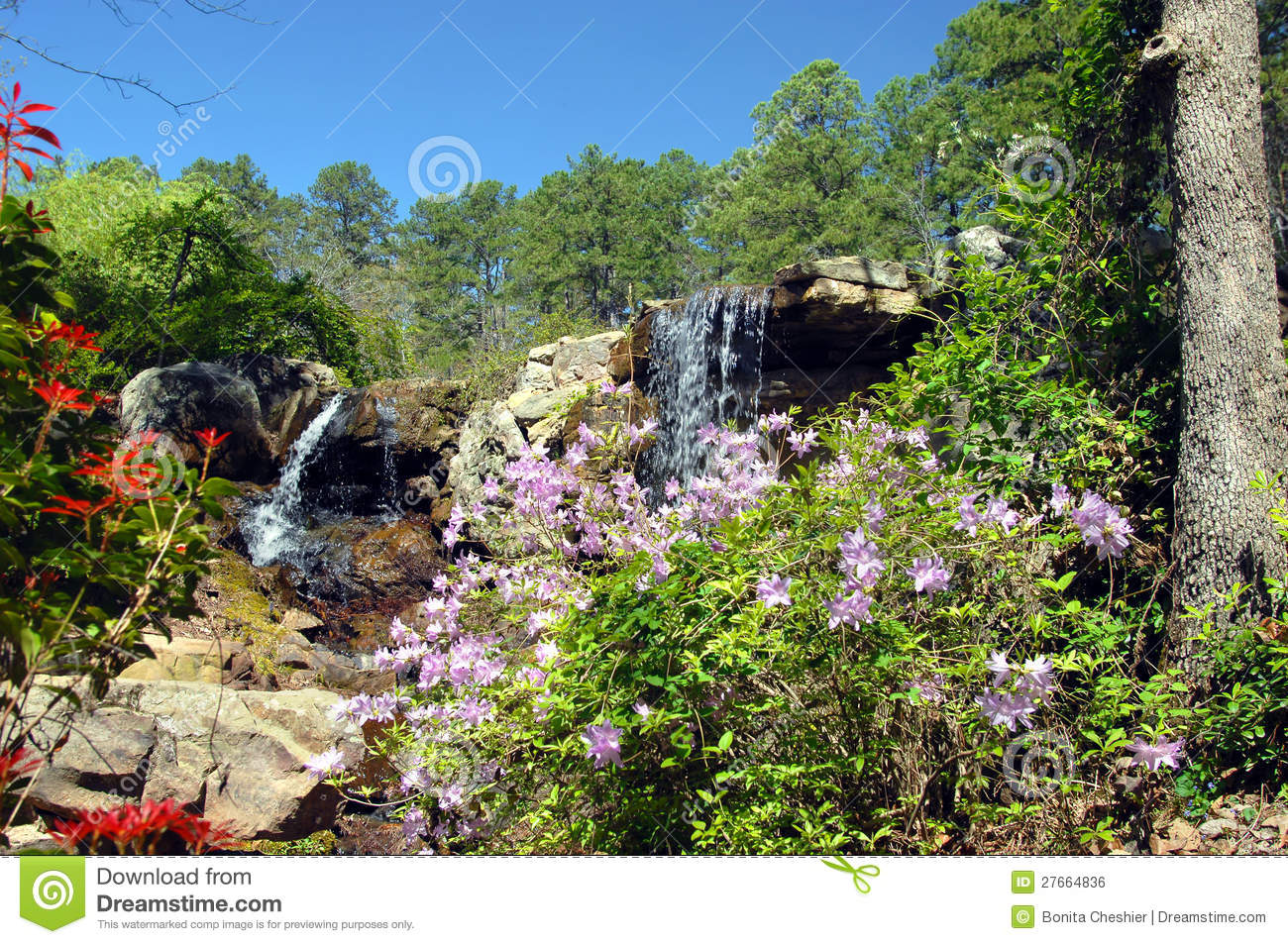 Blooming Waterfall Stock Photo Image Of Ledge Rocky 27664836