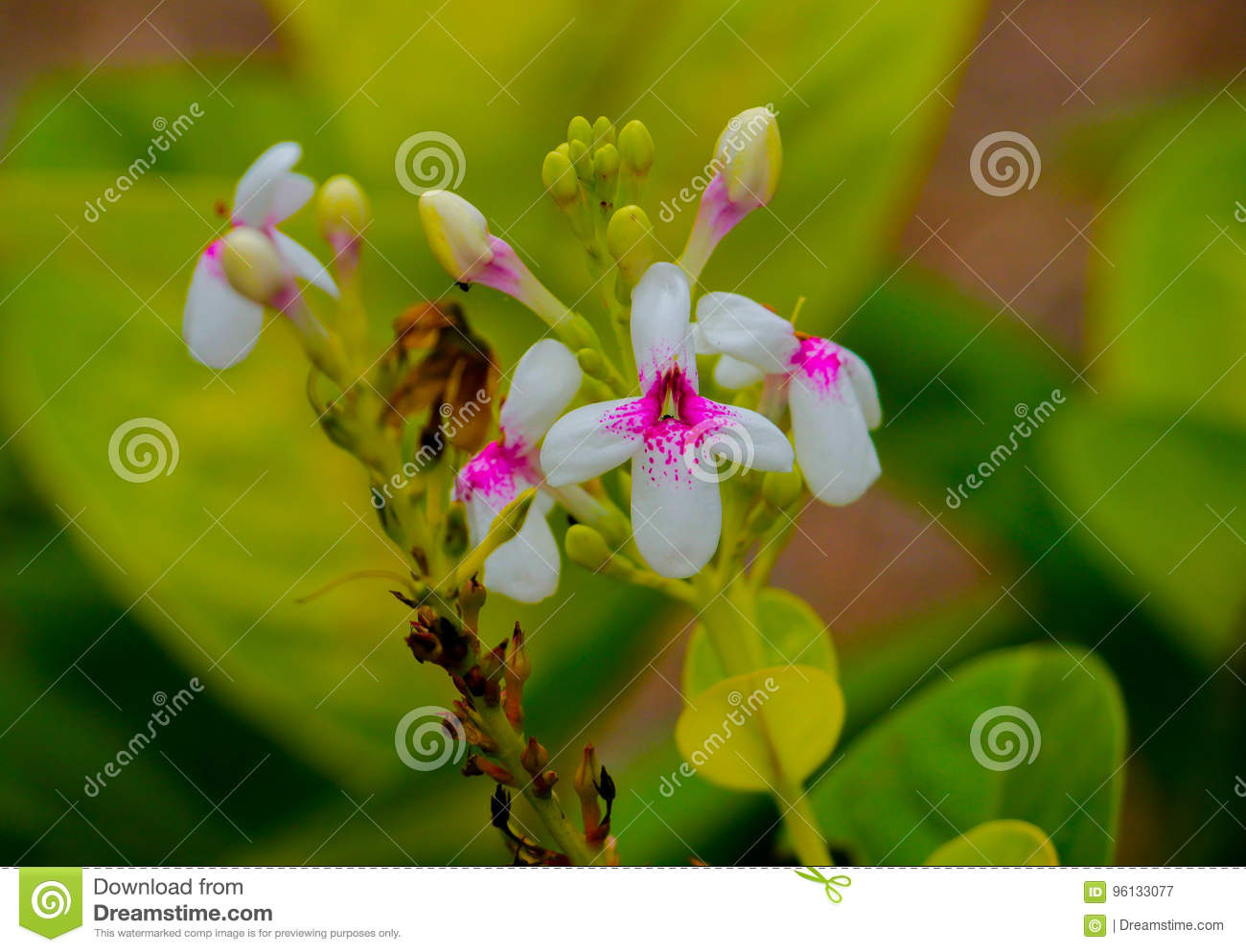 Blooms stock image image of garden whiteflowers flowers 96133077 download blooms stock image image of garden whiteflowers flowers 96133077 mightylinksfo