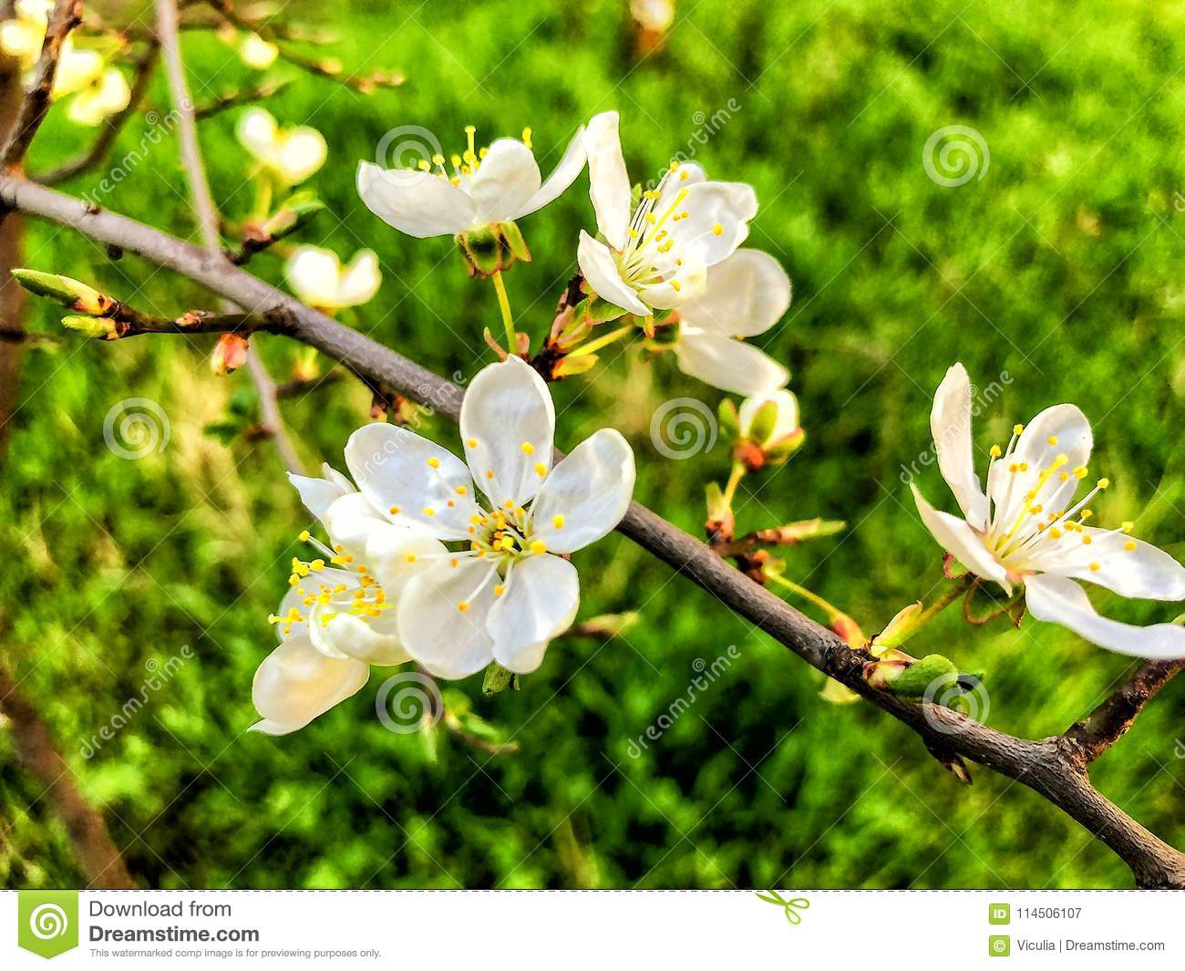 Blossom Branch Close Up Spring Weather Sunny Sky Flowering Trees