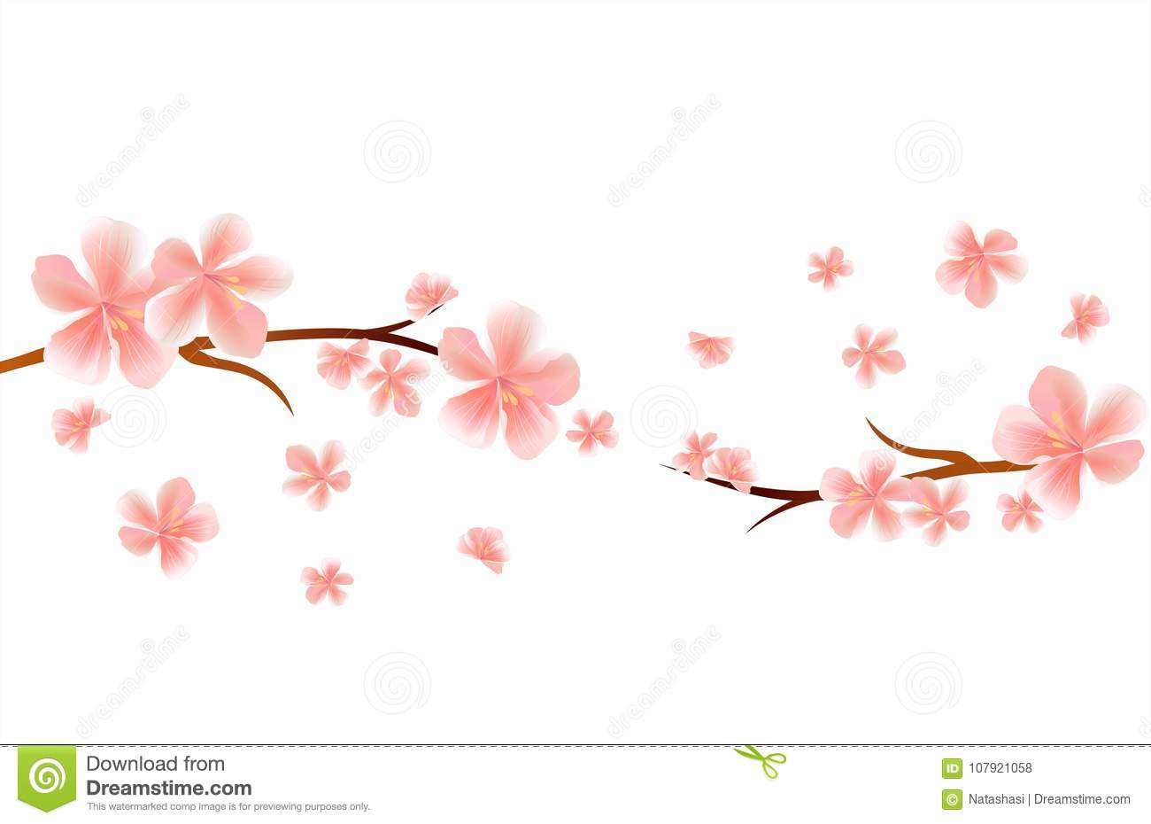 Blossom Branches Of Sakura With Pink Flying Flowers Isolated On