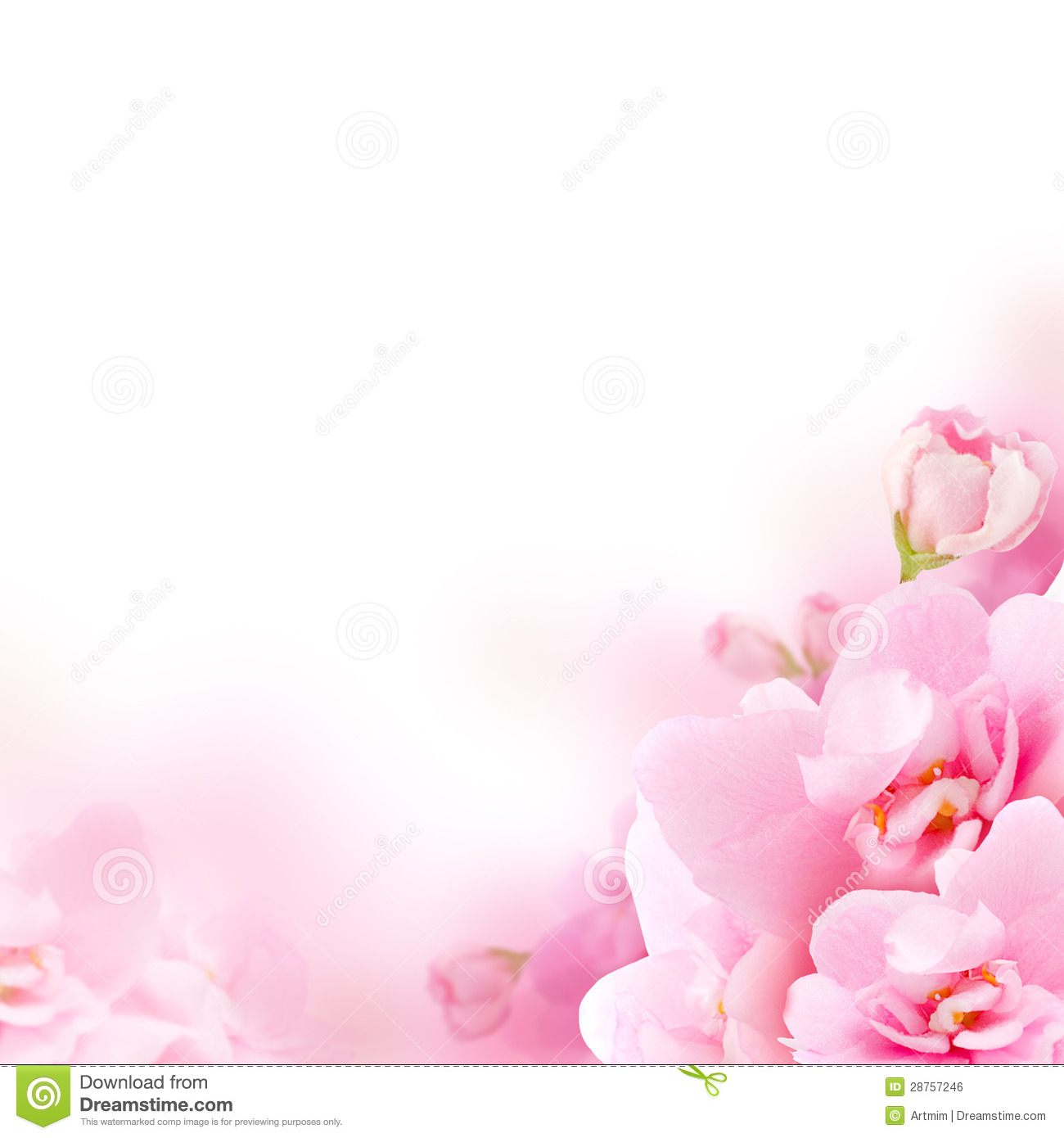 Blossom Pink Flower Floral Background Stock Photo Image Of