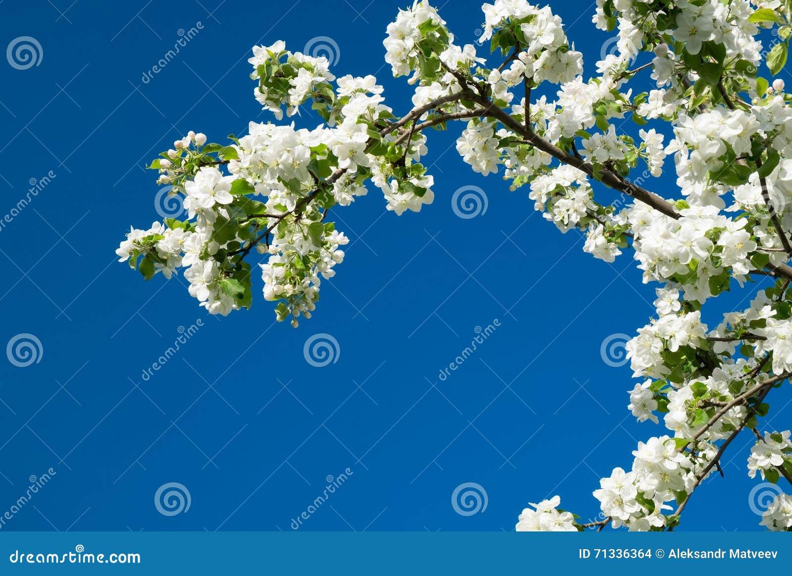 Blossom Tree Over Nature Spring Flowers Blue Sky Horizontal