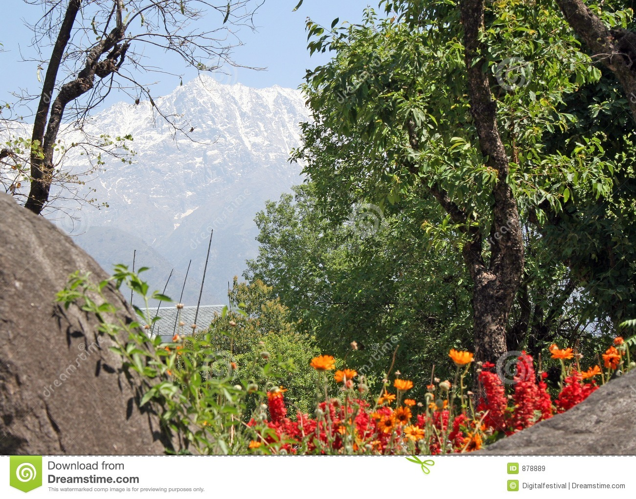 Blossoming Flowers In Himalayan Spring Season Stock Image Image Of