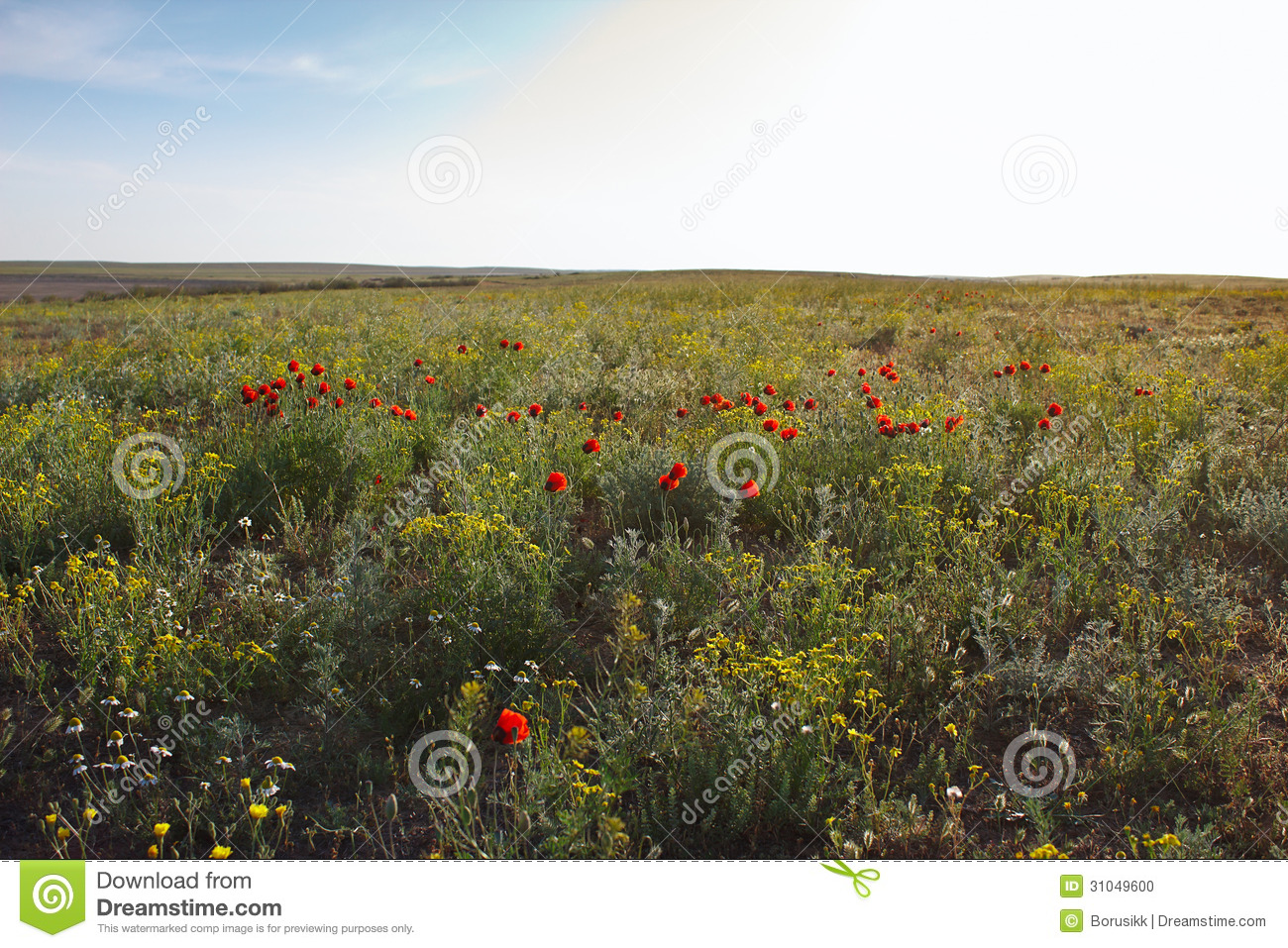 Blossoming steppe with wild flowers and bright red poppies stock photo