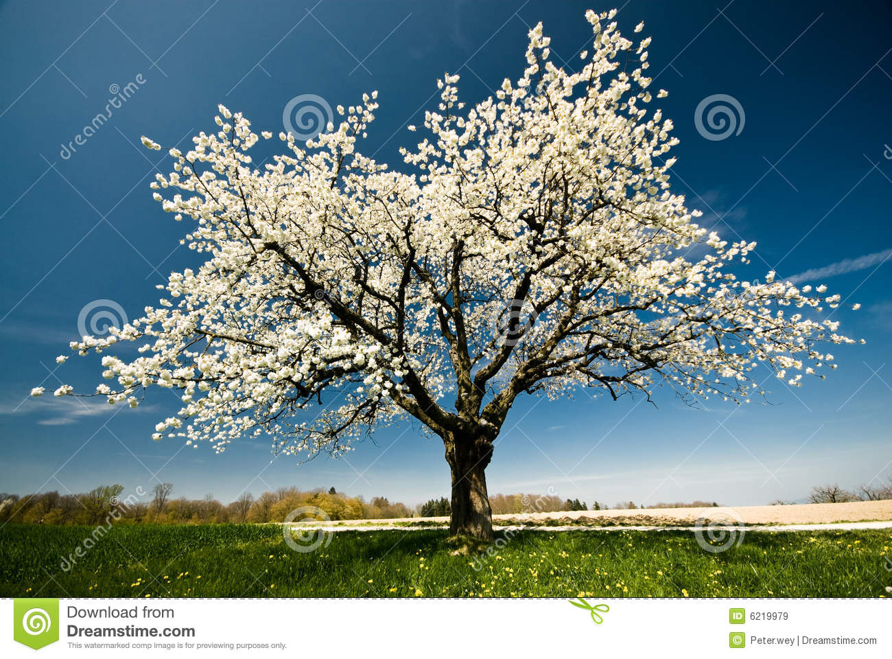 Blossoming tree in spring.