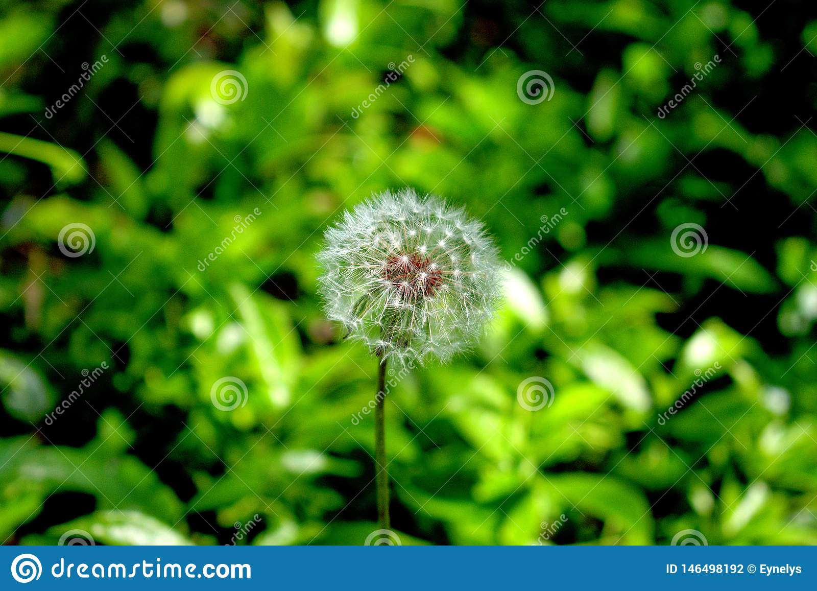 Blow on a Dandelion and Make a Wish
