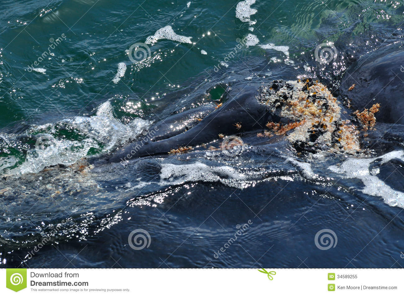 Blow holes stock image. Image of mouth, right, african ...