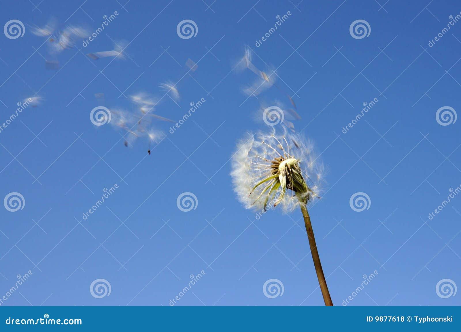 Blowball contre le ciel bleu