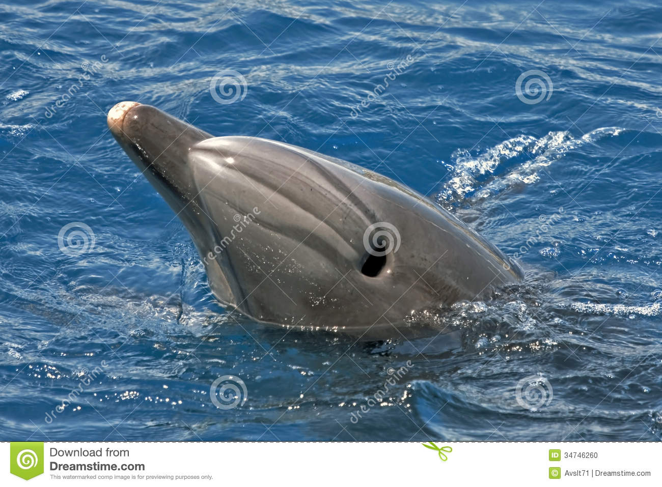 Blowhole of the dolphin stock photo. Image of anatomy - 34746260