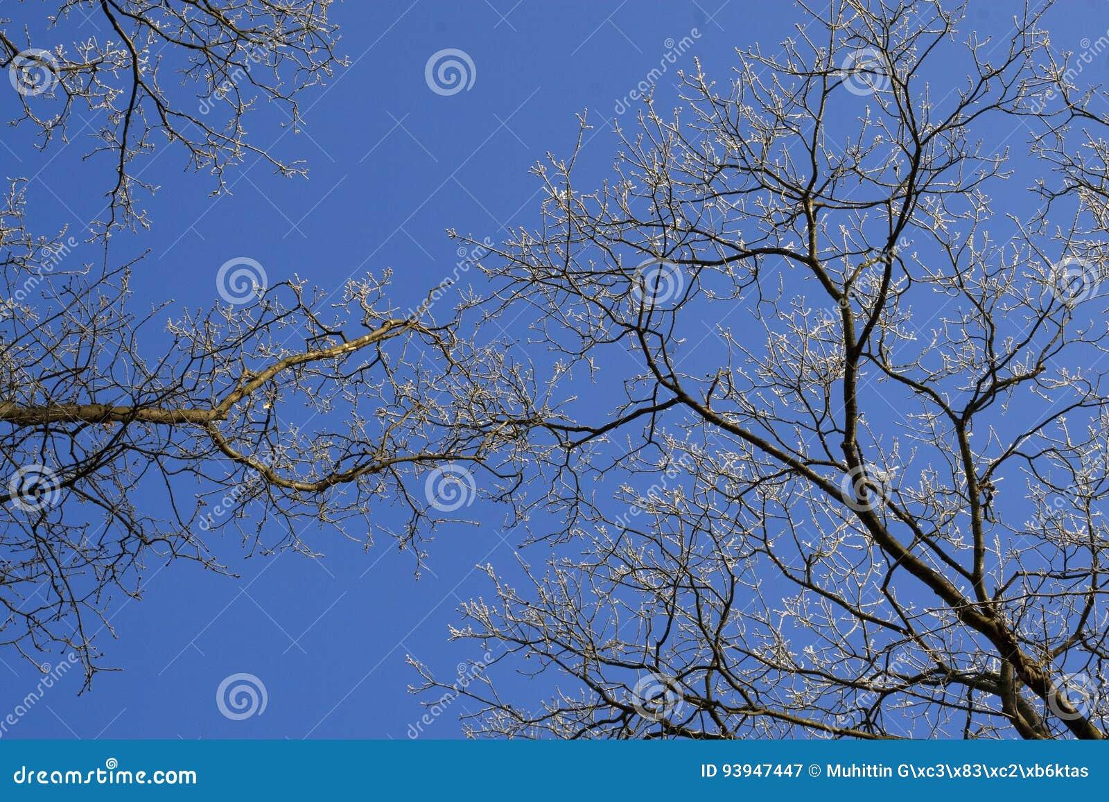 Blue över skytree