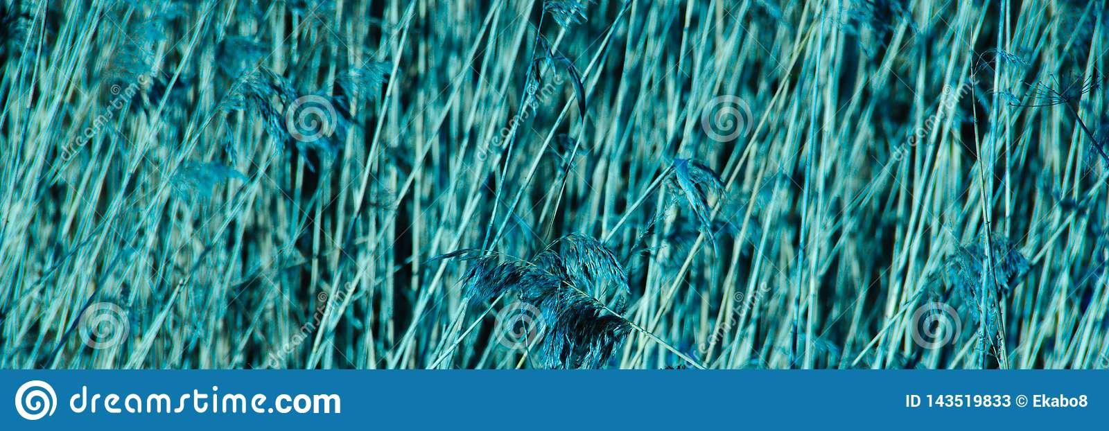 Blue abstract background. cropped dry branches textured natural background.