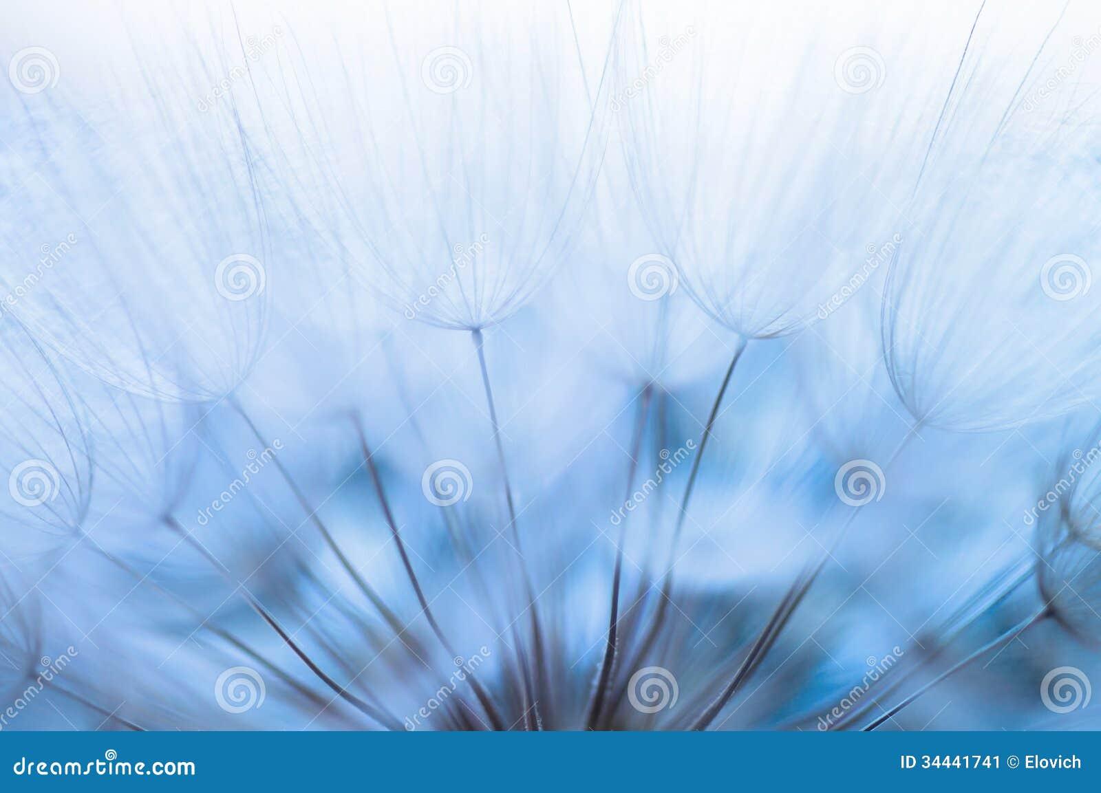 Seeds Clipart