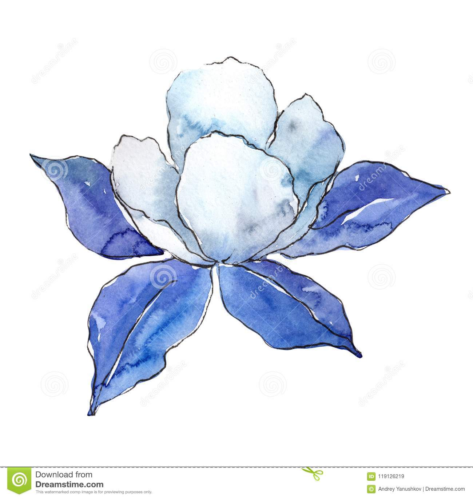 Blue Aquilegia. Floral botanical flower. Wild spring leaf wildflower isolated.