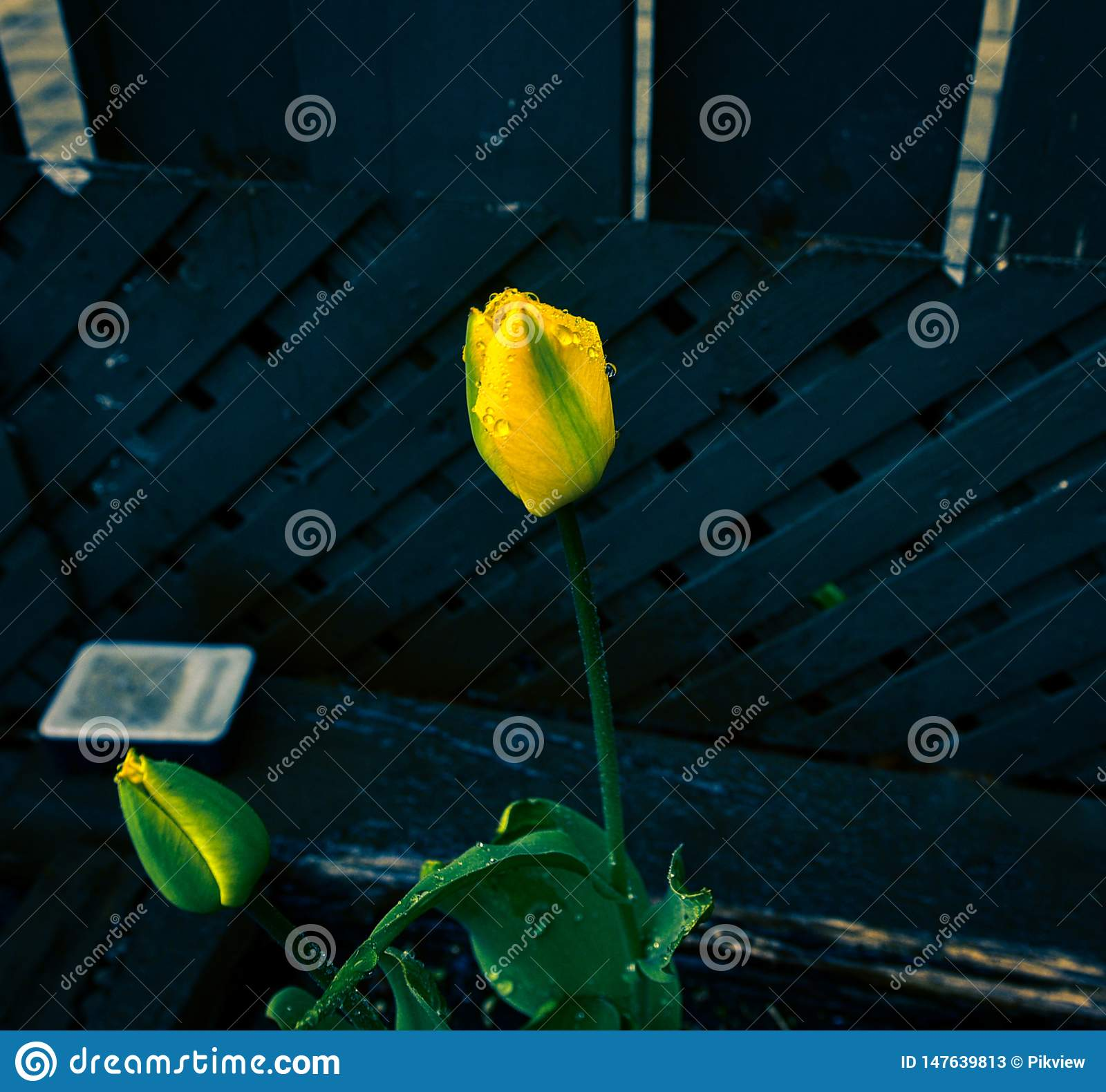 Best looking blue background with yellow flowers