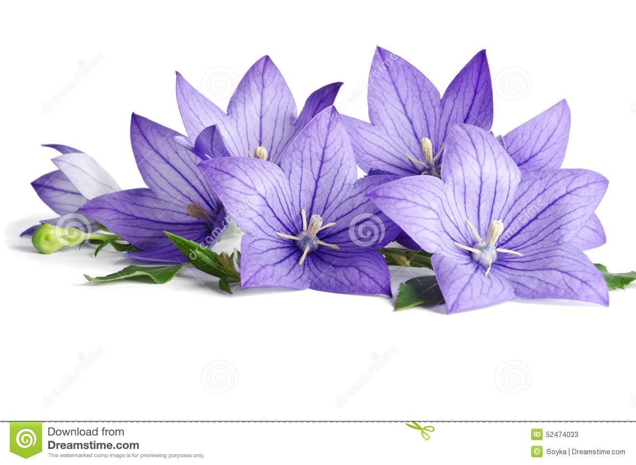 Blue bell flowers stock image image of beauty flowers 52474033 blue bell flowers mightylinksfo