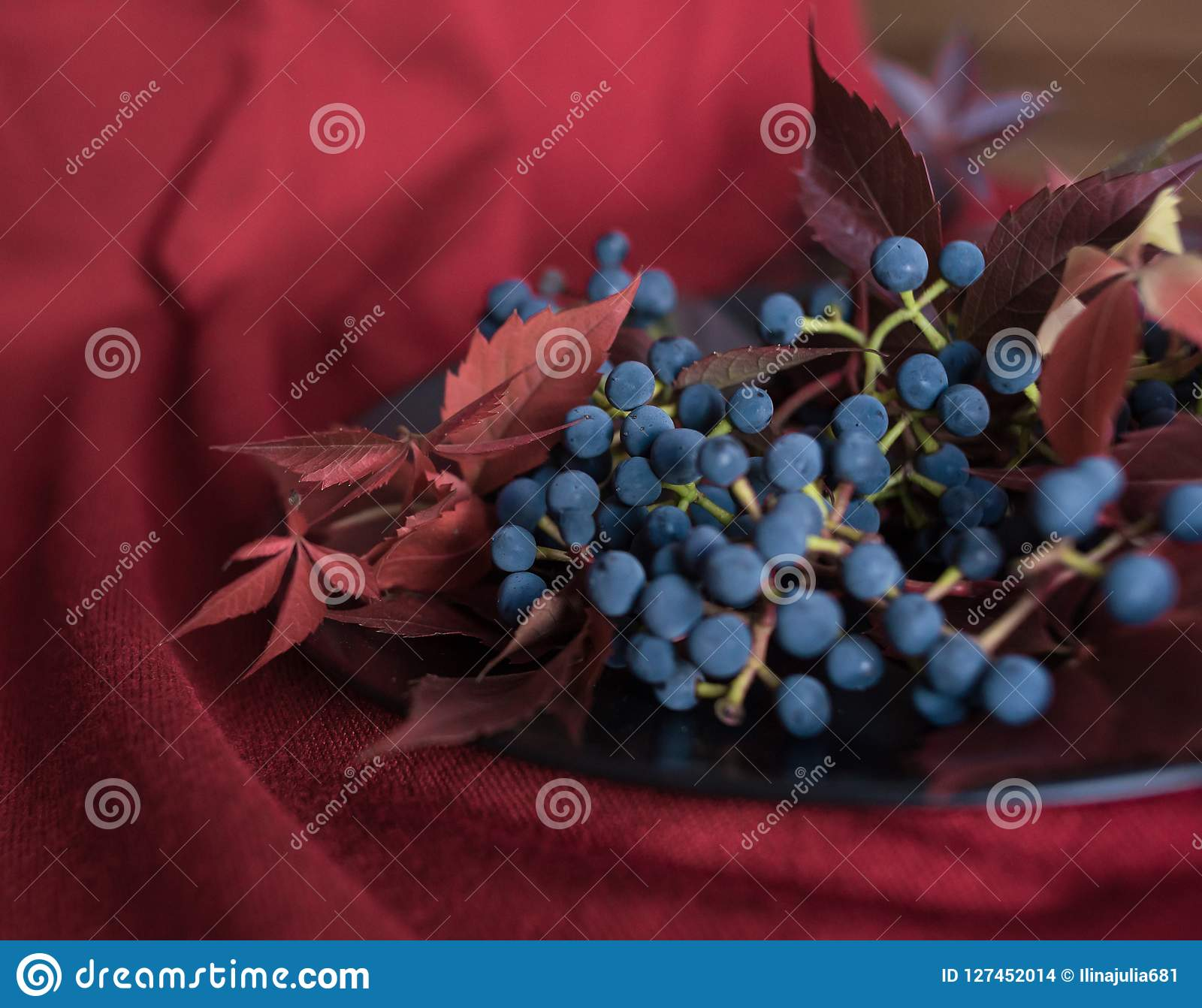 blue berries grapes red leaves close-up macro texture